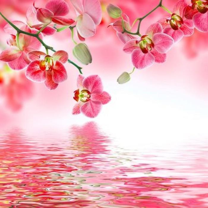 """Фотообои """"Цветы орхидеи"""" (состоит из 3 частей), 2,7 х 2,7м"""