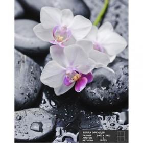 Фотообои К-095 «Белая орхидея» (4 листа), 140 × 200 см