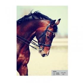 Фотообои К-103 «Конь» (4 листа), 200 × 140 см
