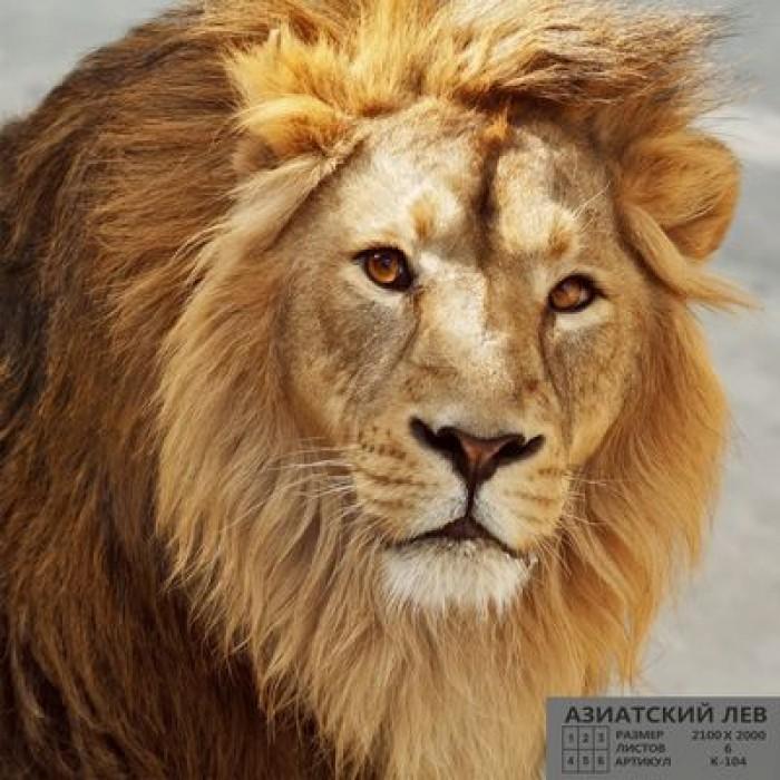 Фотообои К-104 «Азиатский лев» (6 листов), 210 × 200 см