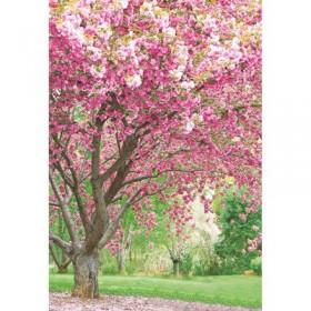 Фотообои К-127 «Цветущая сакура» (4 листа), 140 × 200 см